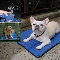 "Your pet will chill out and stay cool for hours on our Body Cooler® mat designed with water-absorbing crystal beads. This innovative technology will give immediate relief and reduce the risk of an overheated pet in the house, on the deck or patio, or in a favorite crate. 20"" L $34—Now $24.95 30"" L $42—Now $34.95 39"" L $65—Now $54.95 maybe for jodi's piggies???"