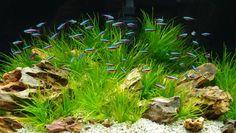 Jak správně postavit akvárium? stavba, akvária, chov, akvarijních, ryb, akvaristika, Akvárium by mělo být nejen domovem vodním živočichům a rostlinám, ale současně i estetickým…