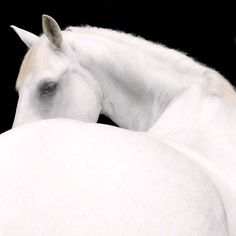 EQUINE  PHOTOGRAPHS By, Ray Hartl
