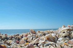Sanibel Island, FL ~ Love the Sea Shells!