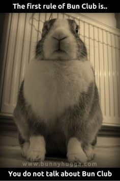 Hashanah oh bunny! Funny Rabbit, Funny Bunnies, Pet Rabbit, Baby Bunnies, Baby Animals, Funny Animals, Cute Animals, Cute Bunny Pictures, Bunny Images