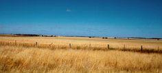 Wheatfields in the Wimmera