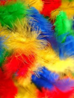feathers!