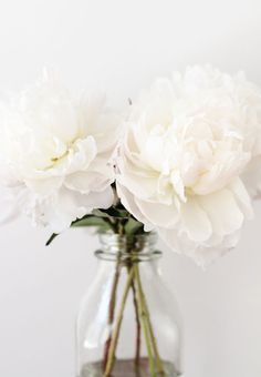 Peonies.....One of my favorite flowers....just bought some today, but can't seem to be able to grow them.