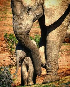 Elephant with baby animal photography pictures and photos