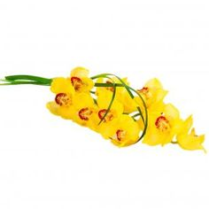 Yellow Orchid, Interflora, Finnish Flower Shop, March 2016