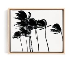 Beach, Destination, Floral And Botanical, Landscapes, Modern, Black And White Limited Edition Art By BeachPaperCo. Noir Limited Edition Art. Natural Raw Wood Canvas Frame. Abstract, Art, Art Print, Art Prints, Black And White, Minimalist, Modern, Palm Tree, Palm Trees, Photography, Print, Wall Art, Wall Decor . Abstract|art|art Print|art Prints|black And White|minimalist|modern|palm Tree|palm Trees|photography|print|wall Art|wall Decor Art Print. Wood Canvas, Canvas Frame, Canvas Art Prints, Fine Art Prints, Puzzle Art, Botanical Art, Custom Art, Abstract Art, Palm Trees