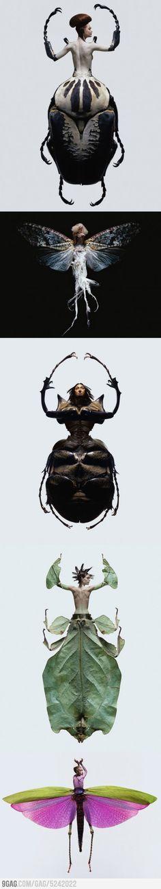 Insectes x Women