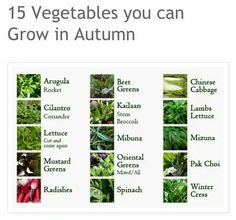 15 vegetables to grow in the fall