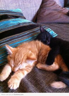 Gifs and pics of cats hugging things Baby Cats, Cats And Kittens, Baby Animals, Funny Animals, Cute Animals, Baby Kitty, Cat Hug, Dog Cat, Lots Of Cats