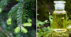 RECEPT - Léčivý smrkový sirup z mladých výhonků proti kašli a nachlazení Plant Leaves, Remedies, Herbs, Drinks, Health, Plants, Food, Cosmetics, Cooking