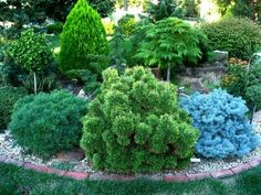 Trendy landscape trees and shrubs small yards 23 Ideas Front Garden Landscape, Garden Shrubs, Garden Trees, Front Yard Landscaping, Landscape Design, Garden Design, Trees And Shrubs, Trees To Plant, Front Porch Plants