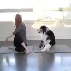 Really smart Collie has nailed this routine! Really smart has nailed this doga routine. Really smart Collie has nailed this routine! Really smart has nailed this doga routine. Cute Funny Dogs, Cute Funny Animals, Cute Baby Animals, Animals And Pets, Funny Pugs, Cute Animal Videos, Funny Animal Pictures, Cute Puppies, Dogs And Puppies