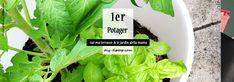 DIY – Un potager bio sur ma terrasse et dans le jardin «della mama» – DIY Tiptop