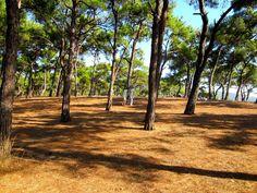 İstanbul'a yakın mesire alanları ve piknik yapılacak yerler listesi. İstanbul'da hafta sonu kafa dinlemek için gidilecek doğal yerler.