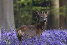 La primavera nelle Fiandre. Al via le fioriture nel Giardino Botanico di Meise