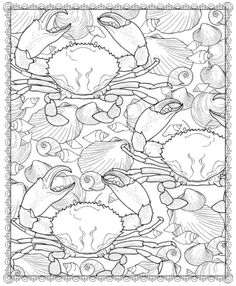 Seashell Patterns Coloring Book, Dover Publications