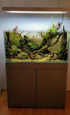 #AquariumAccessories #TropicalFishAquariumIdeas