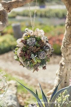 Hanging Succulent Topiary Ball by Oasis Plants - www.succulentsandsunshine.com