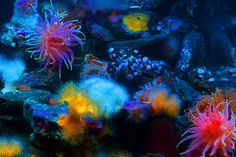 amazing ocean floors - Google Search