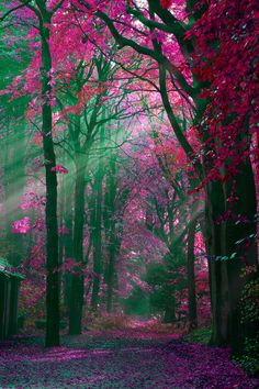 The Netherlands by Rob Janssen!!! Bebe'!!! Beautiful magenta pink foliage!!!