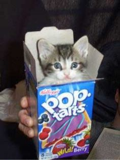 Cute pop tart.