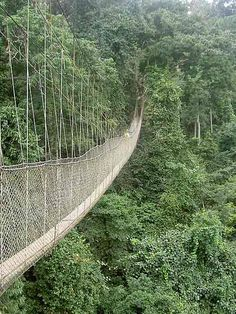 Swing Bridge at Kakum National Park Ghana. I would be nervous to walk this but it would be so worth it! Stunning! #Cheapflights2013