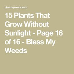 15 Plants That Grow Without Sunlight - Page 16 of 16 - Bless My Weeds