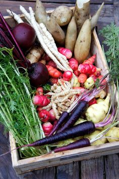 """January Harvest include purple carrots, Chinese artichokes """"Vegetarian 'witchetty grubs' with a fresh, nutty crunch""""  and skirret, an ancient British crop cousin  to the parsnip & with a infinitely more crisp, sugary bite."""