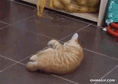 funny-cat-vs-large-scary-potato