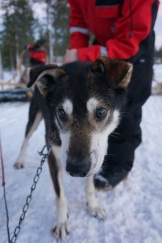 Taking the kids to search for Santa in Lapland, an amazing adventure they'll always remember.