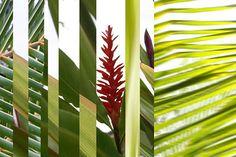Hawaii Grass 2 via MuralsYourWay.com