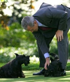 """First Dogs: Barney and Miss Beazley Term: 2001–2009 Breed: Scottish Terrier President: George W. Bush. Ruff-sponsibilites around the White House: Starring in feature """"films"""" around the Oval Office, taking George W. Bush on his daily walk, helping with the White House's annual Christmas decorations."""