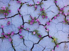Unik, bunga-bunga cantik ini tumbuh di sela retakan tanah tandus | merdeka.com