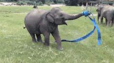 This Elephant Is So Happy