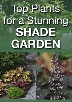 Top Plants for a Stunning Shade Garden. Photos show good variety of shade plants and they're identified for you. #garden #shade