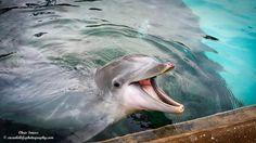 Dolphin feeding area.