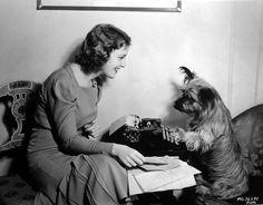Jeanette MacDonald's Skye Terrier helps her with the fan mail Skye Terrier, Terrier Dogs, Terriers, Jeanette Macdonald, Dog Varieties, Light Of Life, Like A Boss, Dog Art, Dog Life