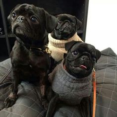 Such dapper sweaters