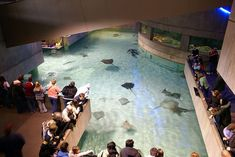 The National Aquarium in Baltimore has been open since 1981, and receives around 1.5 million visitors per year. The aquarium contains more than 1 million gallons of water as well as a rainforest terrarium on the roof. There are more than 16,500 specimens living inside, representing around 660 species.