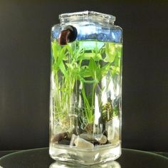 Self-Cleaning Betta Fish Tank - a brilliant idea! no filters, no pumps, no tubes - video shows how it works