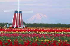 It's known as the Wooden Shoe Tulip Festival, and it happens every spring in Woodburn, Oregon on a 40-acre farm. This breathtaking event is a must-do for anyone living in Oregon or just visiting the beautiful Beaver State. The week-long festival has something for everyone — full of fairytale-esque s
