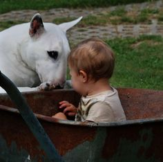 I love you, hairless, ugly, pup! I will take care of you! Best Dog Breeds, Best Dogs, Beautiful Dogs, Animals Beautiful, Chien Bull Terrier, Animals And Pets, Cute Animals, Baby Puppies, Dog Baby