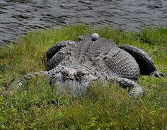 Play as it lies? Yeeeeaahhhh......I don't think so. | Rock Bottom Golf #RockBottomGolf