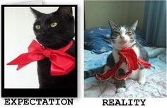 19 Times Expectations Didn't Match Reality In 2013 Funny Meme Pictures, Funny Memes, Hilarious, Crazy Cat Lady, Crazy Cats, Expectation Reality, You Had One Job, Pinterest Fails, Here Kitty Kitty