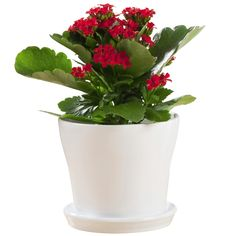 Find Scheurich 19 x 17cm Alaska 108 Glazed Indoor Pot at Bunnings Warehouse. Visit your local store for the widest range of garden products.