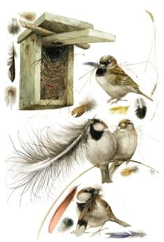 Marjolein Bastin once again perfectly captures the birds doing what they love to do!.