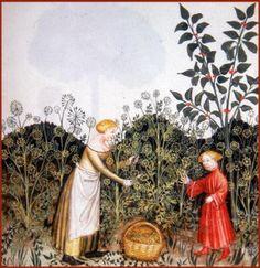 COMO AS ABELHAS SALVARAM O INFANTE D. HENRIQUE