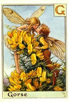 Alphabet Fairies:  Gorse by Cicely Mary Barker