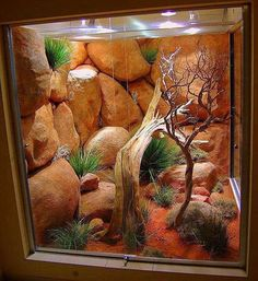 Brilliant 70+ Best Ideas Bearded Dragon Habitat https://meowlogy.com/2017/03/29/70-best-ideas-bearded-dragon-habitat/ If your plan is to house Bearded Dragons together, utilize a bigger cage to lower the potential for aggression and monitor your dragons closely. Bearded Dragons are decidedly one of the the optimal/optimally pet lizards it's possible to own. They are usually sociable creatures... #beardeddragoncage
